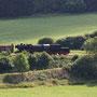 Mit dem um drei Holzwagen aufgestockten Sommerdampfzug rollt die 52 bei Hohenfels zu Tal - Foto: Tobias Hartmann