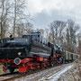 Im Wald bei Heimerdingen - Foto: Wolfgang Vogt
