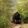 Zwischen Olef und Schleiden verläuft die Strecke etwas abseits im Wald