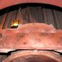 Das beschädigte Reglerrohr und die darunter liegenden Rauch- und Heizrohre