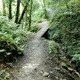 Un beau sentier, hélas que nous ne trouvons pas souvent