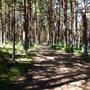 Une forêt de pins avant Berducedo