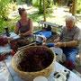 Holunderbeeren Ernte im Garten . Mein Vater und Andrea pulen 6 Stunden die Beeren von ihren Zweigen, Kräuterworkshop