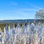 der erste Frost zaubert schöne Eiskristalle an Gräser und Bäume
