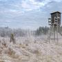 leichter Nebel und Frost zauberten diese tolle Landschaft in der Nähe von Herchenhain
