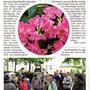 Vogelstimmenwanderung Friedhof Torgau Mai 2012