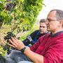 Winzer mit Helfern bei der Weinlese