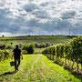Winzer nach der Weinlese im Weinberg