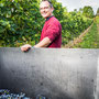 Weinfotografie bei der Weinlese