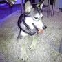 Duke hat seine Familie mit tollem Hundekumpel gefunden. Wir sind glücklich über diesen Ausgang und das Duke es jetzt schön haben wird.