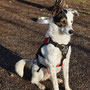 Dobby konnte nach langer Krankheit und anschließender Behandlung zu seinen neuen Besitzern ziehen. Dort genießt der liebe und aufgeweckte Kerl sein neues Leben!