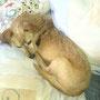 Unser kleiner Opi Feco, der wirklich ein kleiner Angsthase ist, darf in der Pflegestelle bleiben. Ganz herzlichen Dank, ihr seid toll.