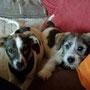 Beauty (jetzt Josi) & Zizi (jetzt Sammy)