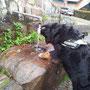 .. Konrad kostet Schwarzwaldwasser