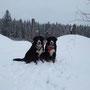 Erst  noch Schnee .... - (Gyöngyi und Ariba)