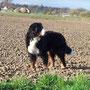 Lady genießt die Sonnenstraheln und die frisch gepflügten Felder