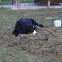 Sunny auf ihrem Super-Draußen-Lümmel-Teppich ;-)