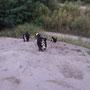 Action - durch die Sanddünen am Meißenheimer Baggersee