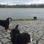 ab an den Rhein