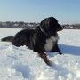 Cacau genießt den Schnee