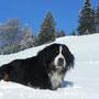 Coskan ganz zu Hause :) in den Bergen