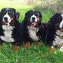 Das Trio vom Bärideich