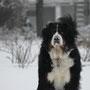 Carlos liebt den Schnee