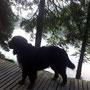Ariba liebt die langen Ausflüge