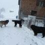Coskan im Schneegestöber ;) Österreich juchuuuuu