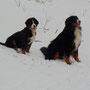 Cacau mit Baila im Schnee
