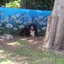oder im Schatten Ruhe finden - das ist Gyöngyi :) inzwischen 7,4 Jahre alt!