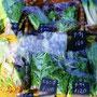 池の入農園の益子の野菜