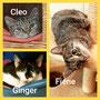 Cleo, Ginger und Fiene