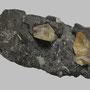 Gelber Calcit auf Sphalerit / Tennessee, USA