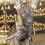 Gingo sieht sich schon mal die Pokale an.