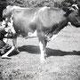 Jame Fin koe melken