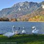 Reintalersee - ein beliebter Natursee