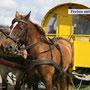 Pferdekutschfahrten - ein Vergnügen auf Hallig Hooge