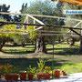 Blick auf die Terrasse und den Garten
