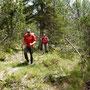 Urwald ähnliches Waldstück