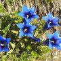 wunderbar die Blütenpracht