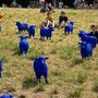 Bertamaria Reetz & Rainer Bonk, blaue Schafe an der A40, 18. Juli 2010