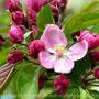 Frühlingserwachen - Dunkelrosa Blüten beim Perspektivenwechsel für Frauen