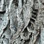 Eine Leiter in der Rinde!? - Interessantes Kunstwerk der Natur