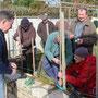 Taille des fruitiers chez Jean Yves Pellen- (Plouvien au jardin)