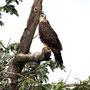 Hálcon, reocrrido en lancha en Catemaco
