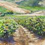 Terras de Vinho - 90cm x 70cm