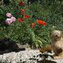Meine Mädchen im Blumenmeer
