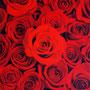 「余白の創造 ... 赤」 6号P(27.3×41.0cm) 油彩画
