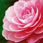 「余白の創造 ... ピンク」 3号S(27.3×27.3cm).jpg 油彩画